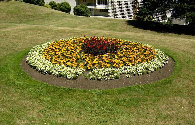 A Flower Bed in Queens Garden, Wanganui